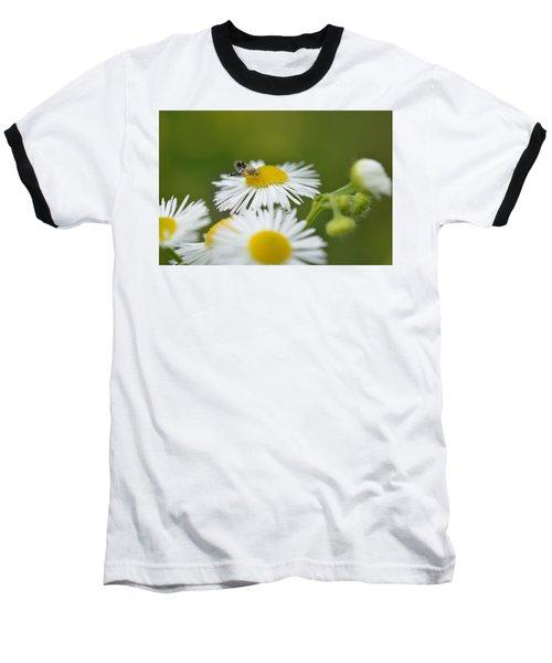 Green Eyes Baseball T-Shirt by Janet Rockburn