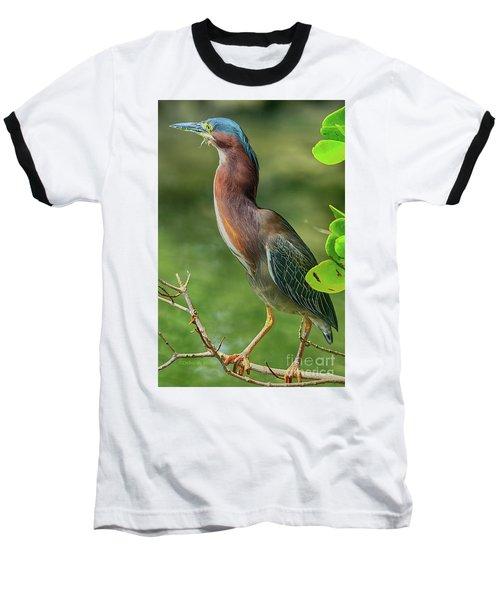 Baseball T-Shirt featuring the photograph Green Heron Pose by Deborah Benoit