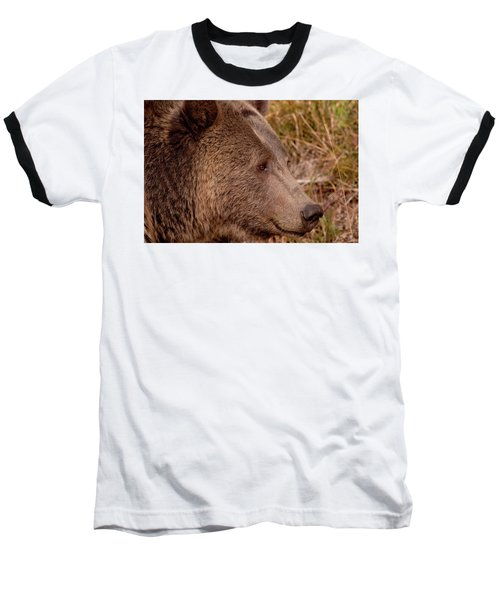 Grizzly Profile Baseball T-Shirt