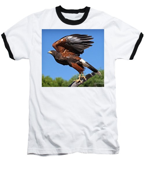 Baseball T-Shirt featuring the photograph Harris's Hawk by Martin Konopacki