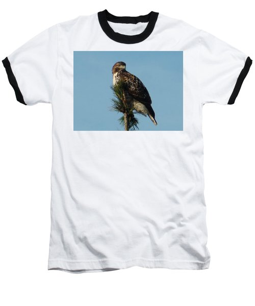 Hawk Atop Tree Baseball T-Shirt