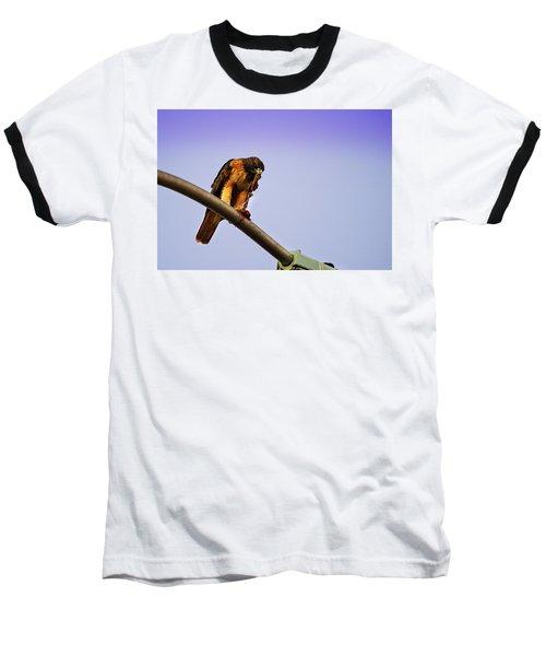 Hawk Eating Baseball T-Shirt