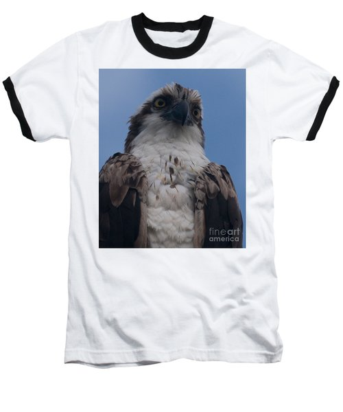 Hawk Stare Baseball T-Shirt