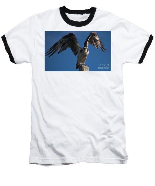 Hawk Wings Baseball T-Shirt