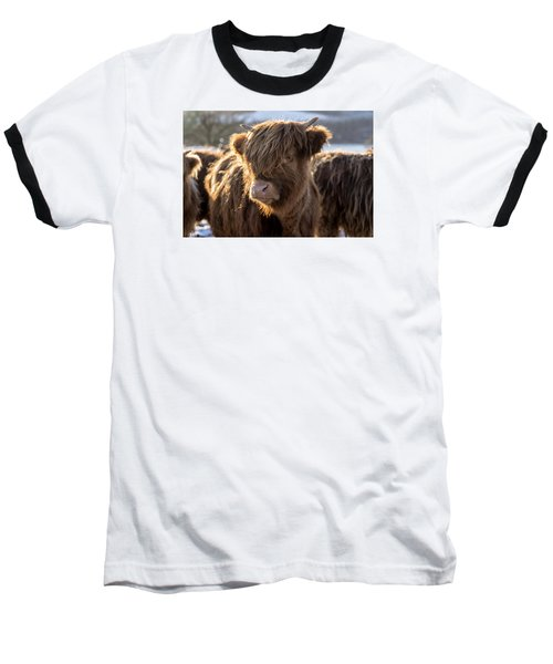 Highland Baby Coo Baseball T-Shirt by Jeremy Lavender Photography