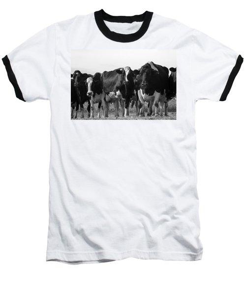 Curious Holsteins Baseball T-Shirt