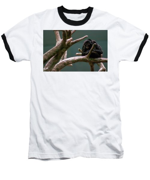 Home On The Limb Baseball T-Shirt