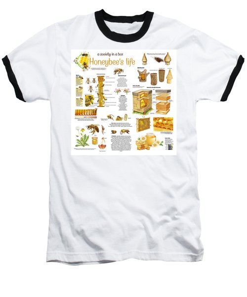 Honey Bees Infographic Baseball T-Shirt by Gina Dsgn