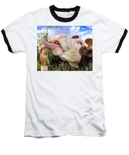 Hungry Cow Eating Grass Funny Picture Baseball T-Shirt