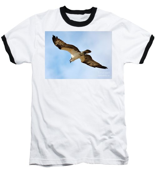 Hunter Osprey Baseball T-Shirt by Carol Groenen