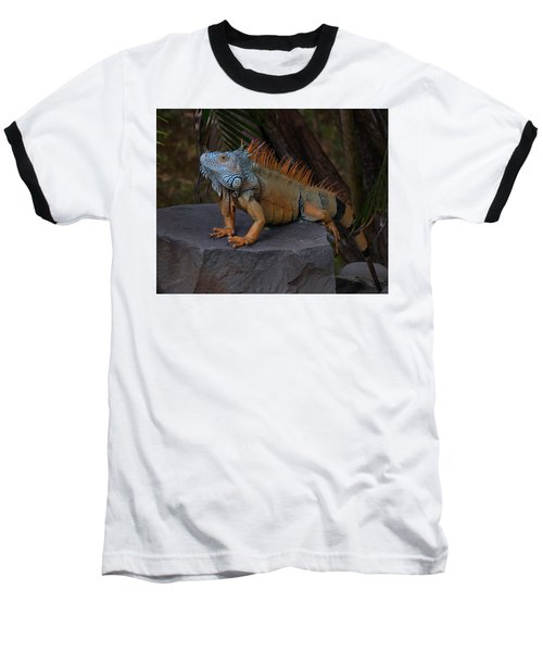 Iguana 2 Baseball T-Shirt by Jim Walls PhotoArtist