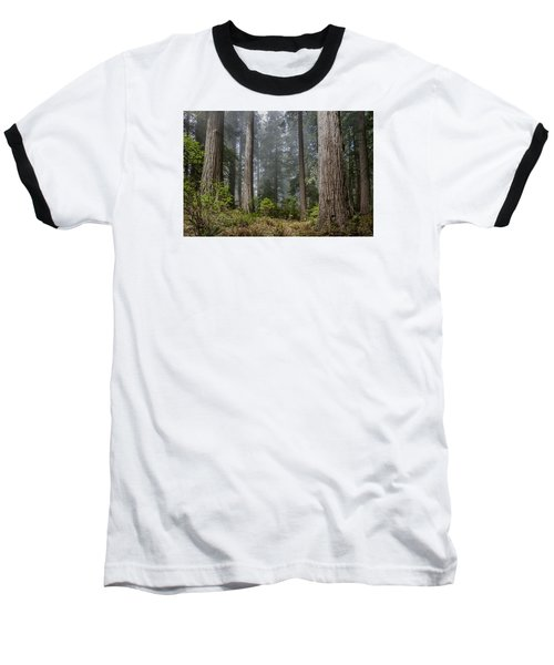 Into The Redwood Forest Baseball T-Shirt by Greg Nyquist
