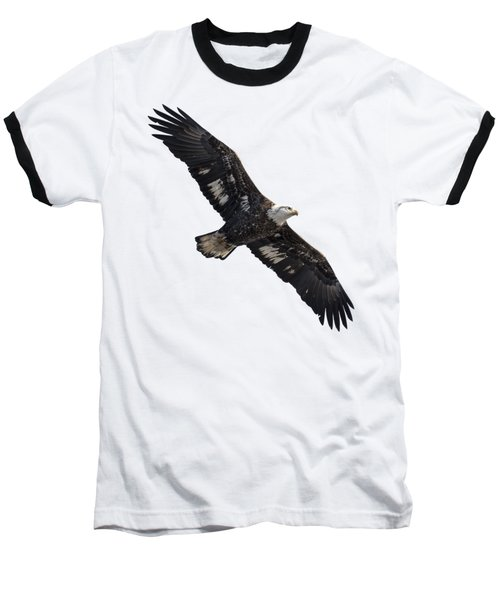 Isolated Juvenile American Bald Eagle 2016-1 Baseball T-Shirt by Thomas Young