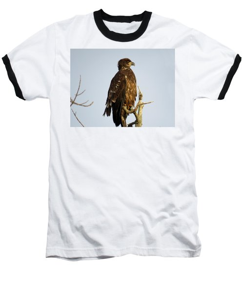 Juvenile Bald Eagle 1 Baseball T-Shirt