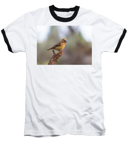 Juvenile Male Red Crossbill Baseball T-Shirt