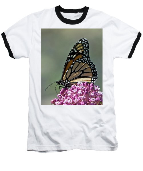 King Of The Butterflies Baseball T-Shirt by Stephen Flint