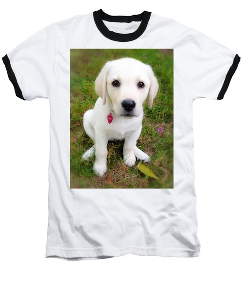 Lab Puppy Baseball T-Shirt by Stephen Anderson