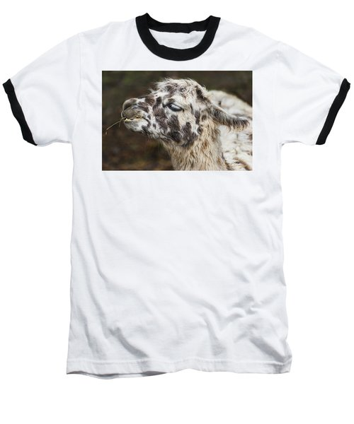 Lady Llama Baseball T-Shirt
