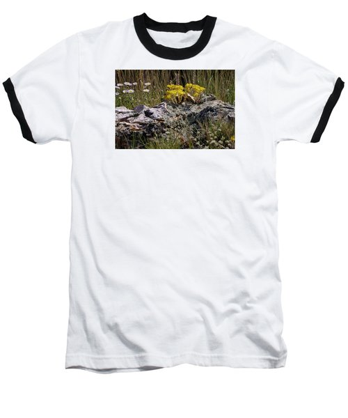 Lanceleaf Stonecrop Sedum 1 Baseball T-Shirt