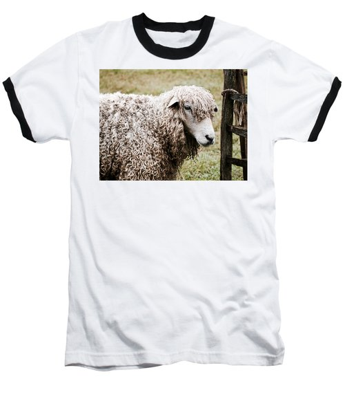 Leicester Longwool Baseball T-Shirt