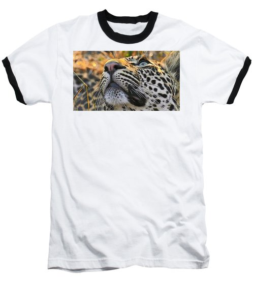 Leopard Aloft Baseball T-Shirt