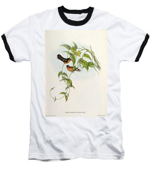 Leucippus Fallax Baseball T-Shirt by John Gould