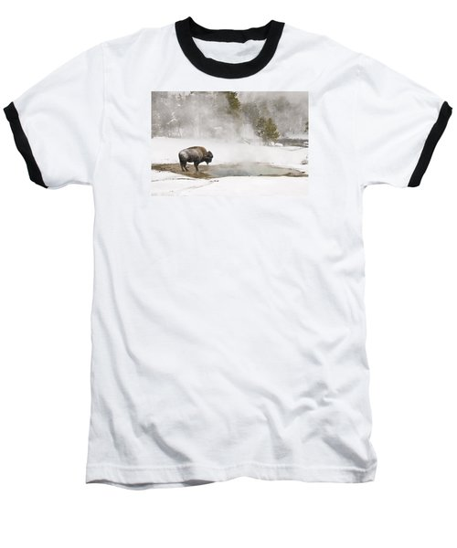Bison Keeping Warm Baseball T-Shirt