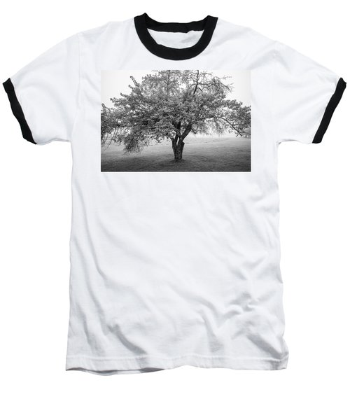 Baseball T-Shirt featuring the photograph Maine Apple Tree In Fog by Ranjay Mitra