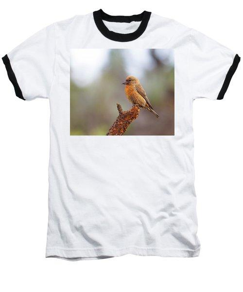 Male Red Crossbill Baseball T-Shirt by Doug Lloyd