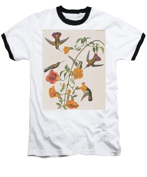 Mango Humming Bird Baseball T-Shirt by John James Audubon