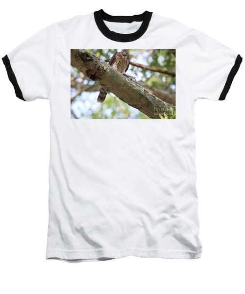 Mean Hawk At Dinner Time Baseball T-Shirt