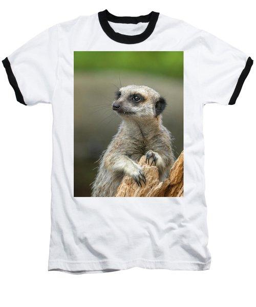 Meerkat Model Baseball T-Shirt