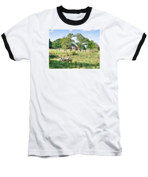 Midwest Cattle Ranch Baseball T-Shirt by Scott Hansen