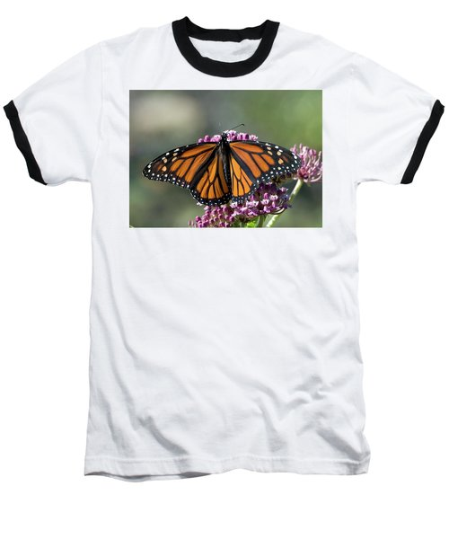 Baseball T-Shirt featuring the photograph Monarch Butterfly by Stephen Flint