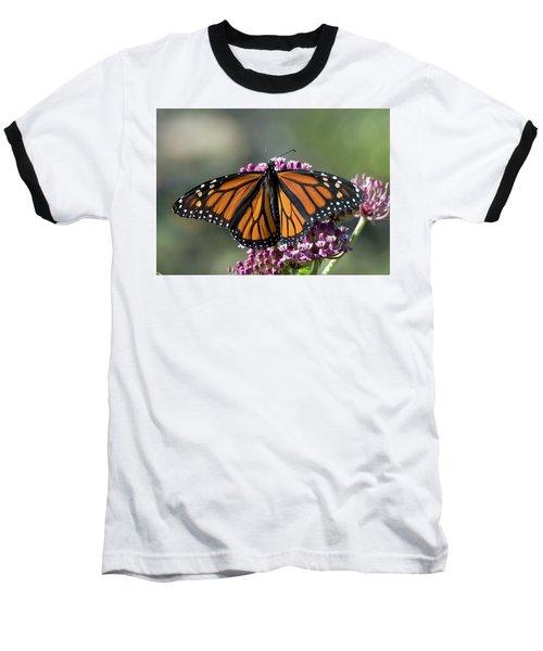 Monarch Butterfly Baseball T-Shirt by Stephen Flint