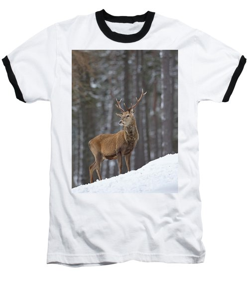 Monarch Of The Woods Baseball T-Shirt