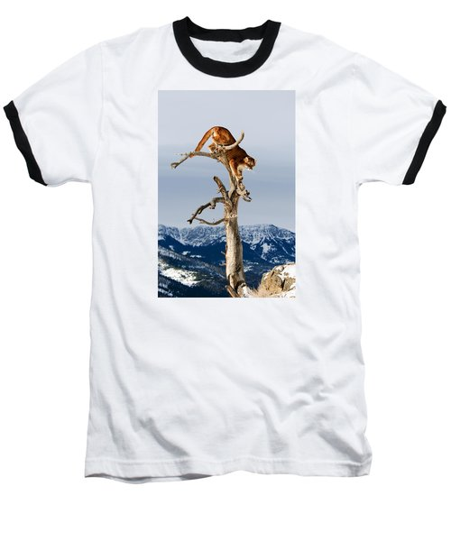 Mountain Lion In Tree Baseball T-Shirt