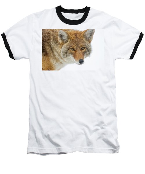 Mr. Coyote Baseball T-Shirt