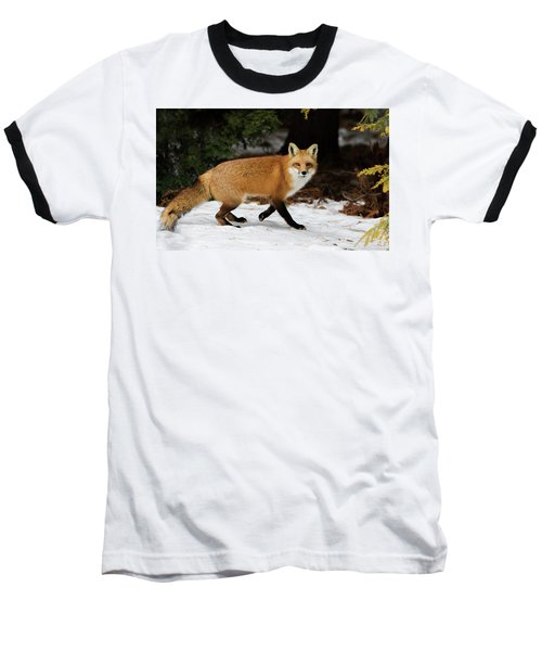 Baseball T-Shirt featuring the photograph Mr Fox by Mircea Costina Photography