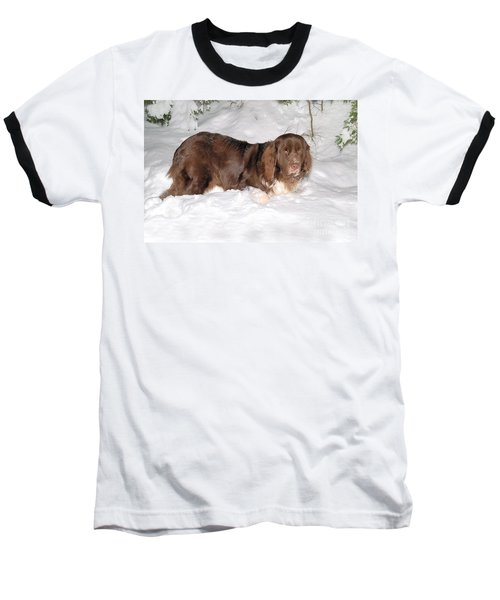 Baseball T-Shirt featuring the photograph Newf In Snow by Debbie Stahre