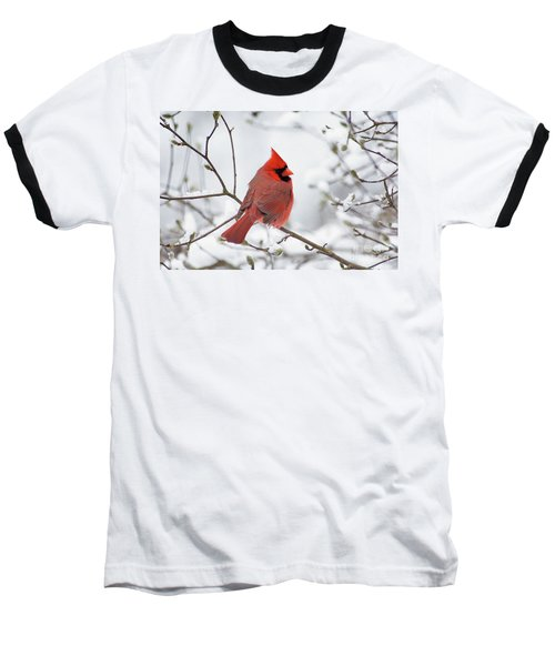 Northern Cardinal - D001540 Baseball T-Shirt by Daniel Dempster