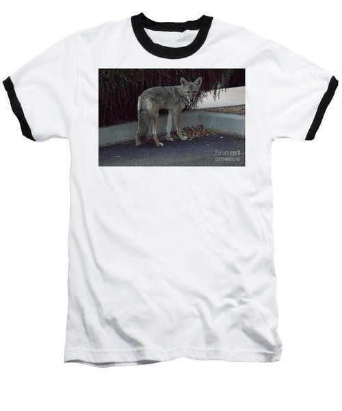 On The Prowl 1 Baseball T-Shirt by Anne Rodkin