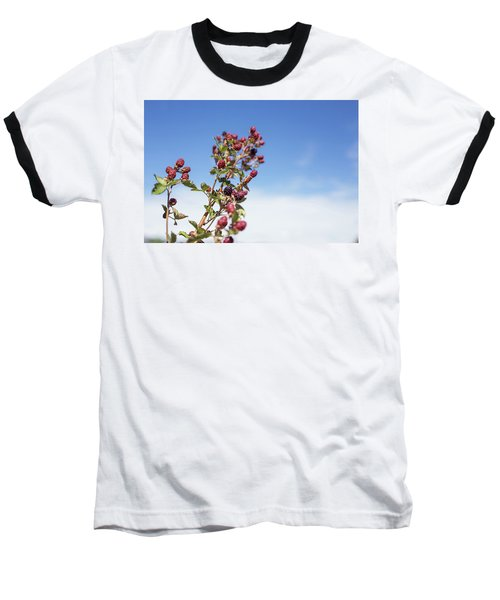 Baseball T-Shirt featuring the photograph Organic Handpicked Home Orchard Raspberries,blackberries From Bu by Jingjits Photography