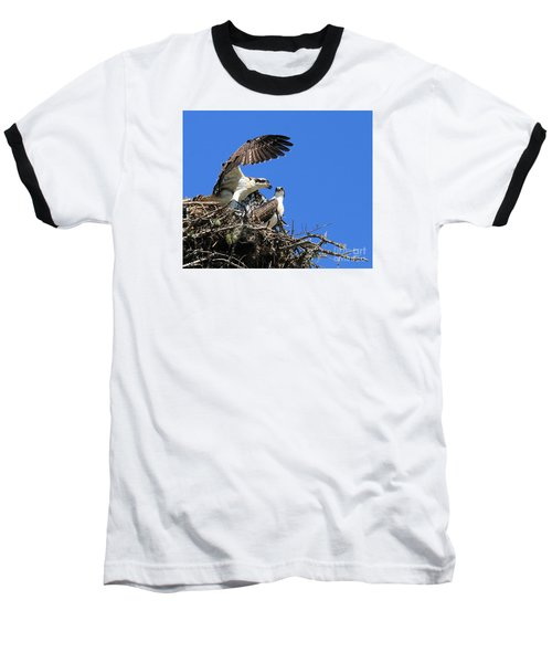 Osprey Chicks Ready To Fledge Baseball T-Shirt by Debbie Stahre