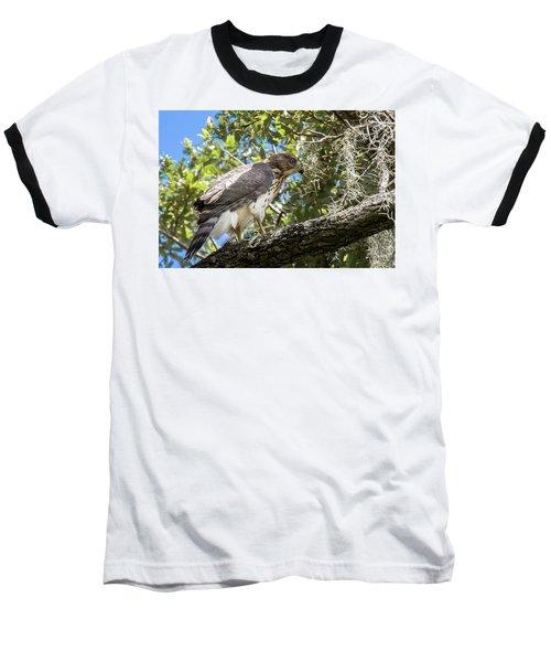 Red-shouldered Hawk Fledgling - 4 Baseball T-Shirt