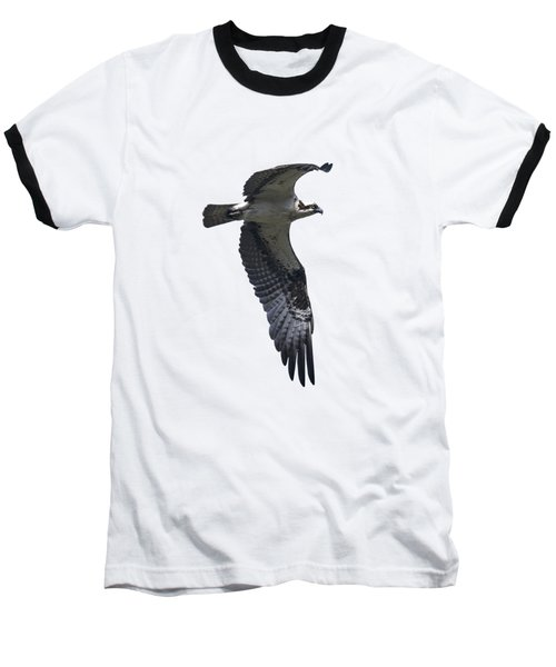 Osprey In Flight 2 Baseball T-Shirt by Priscilla Burgers