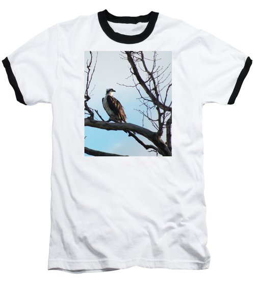 Osprey In Tree Baseball T-Shirt