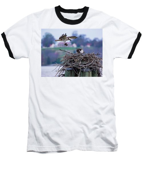 Osprey Nest Building Baseball T-Shirt