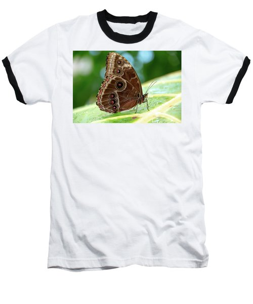 Owl Butterfly Baseball T-Shirt