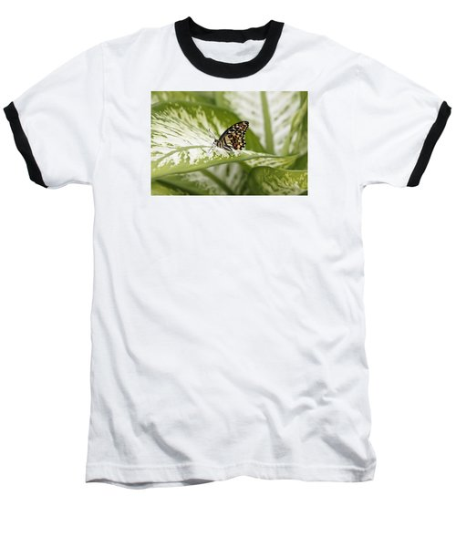 Papilio Demoleus Baseball T-Shirt
